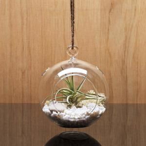 6. 3 X WGV Glass Hanging Plant Terrarium