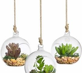 7. SunGrow Hanging Glass Terrariums
