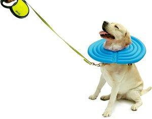 Top 10 Best Inflatable Dogs Collars in 2021 Reviews