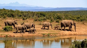 5) SOUTH AFRICA